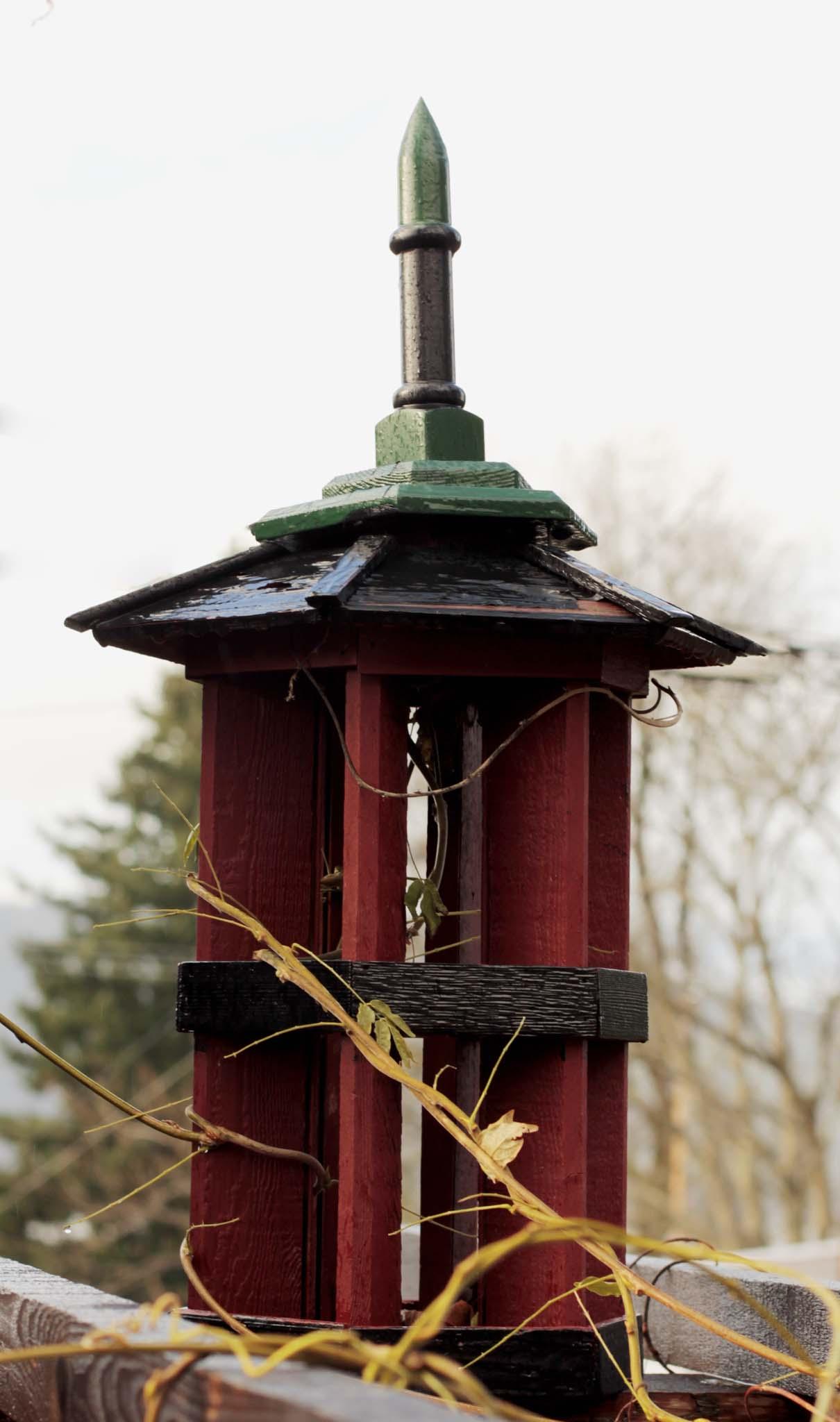 bird3-1342