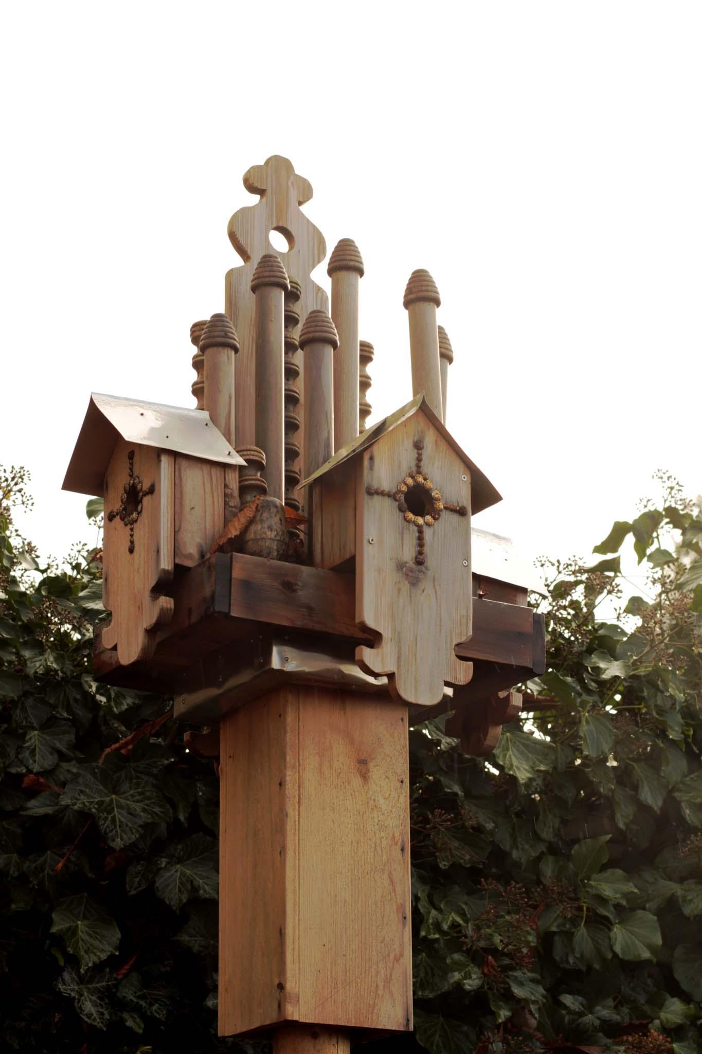 bird5-1339