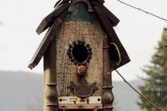 bird4-1341